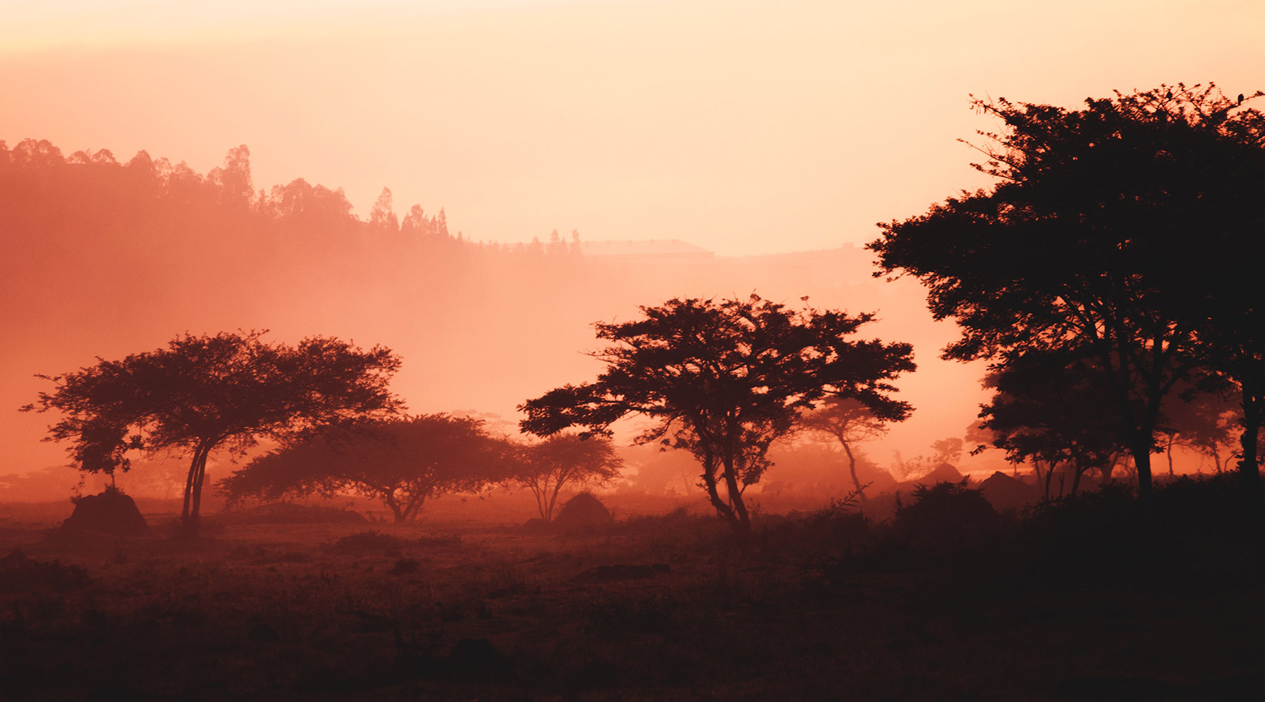 Trees in the African Bush