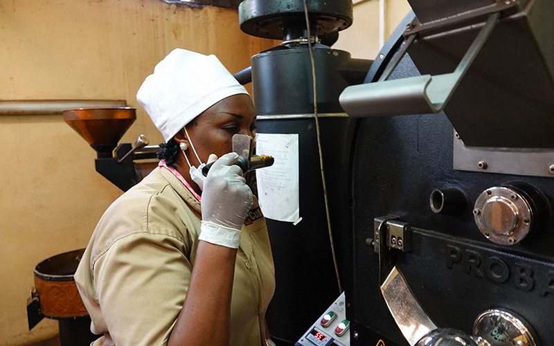 Lady smelling and roasting Susa coffee in Rwanda